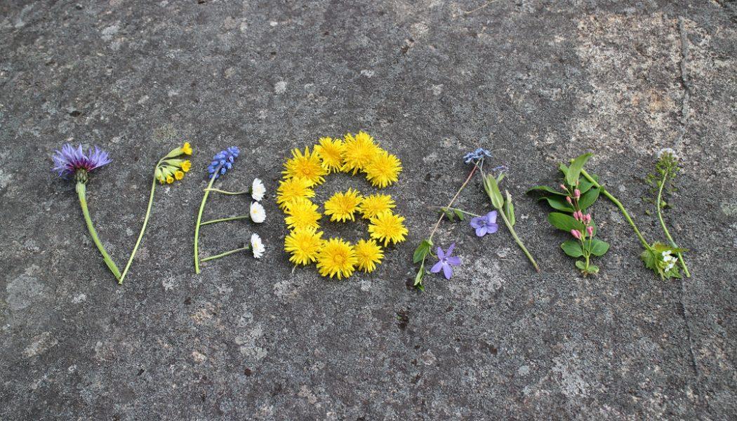 Qué me motivó a compartir este blog del mundo vegano.