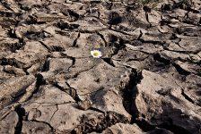 Las 5 causas por las que la ganadería acaba con el planeta.