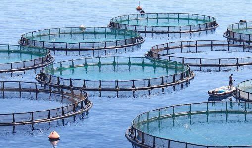 Motivos para NO comer pescado.