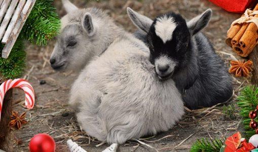 Carta a todos los animales asesinados.