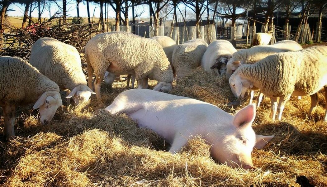 Organizaciones animalistas y Santuarios de animales.